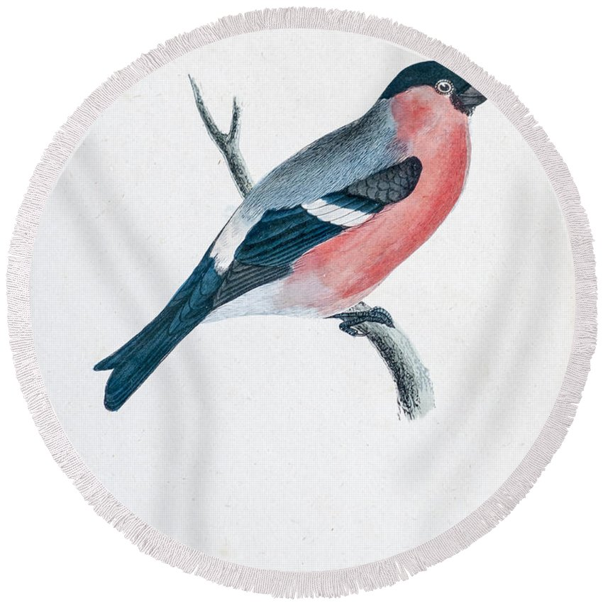 Bird Round Beach Towel featuring the photograph Eurasian Bullfinch Artwork by Ilan Rosen