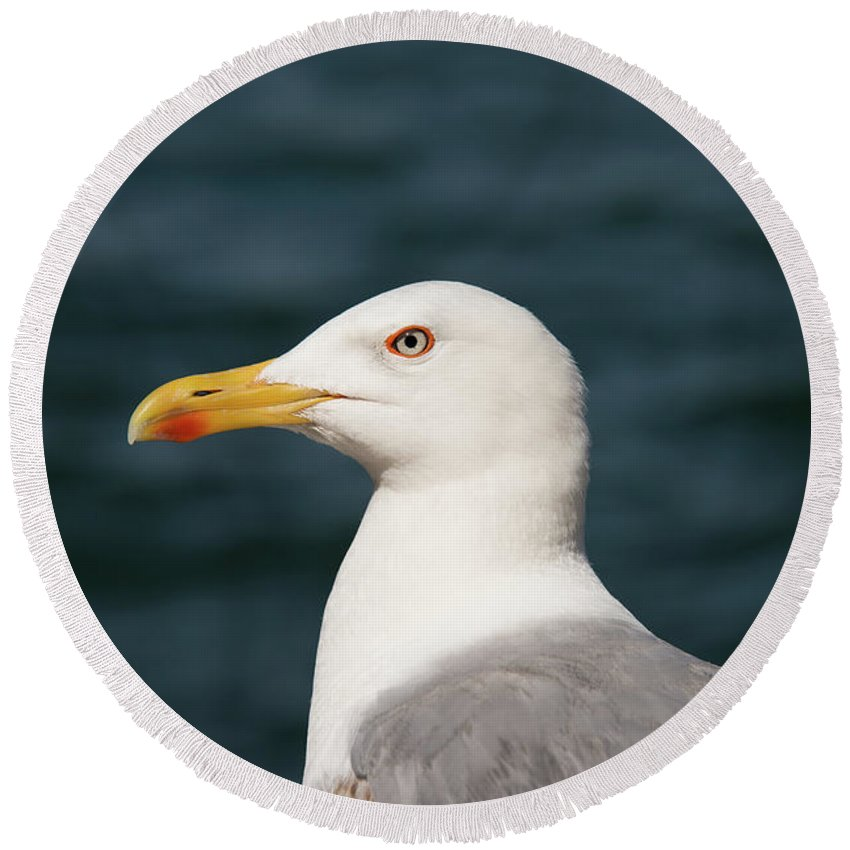 Burgazada Island Round Beach Towel featuring the photograph European Herring Gull Portrait by Bob Phillips