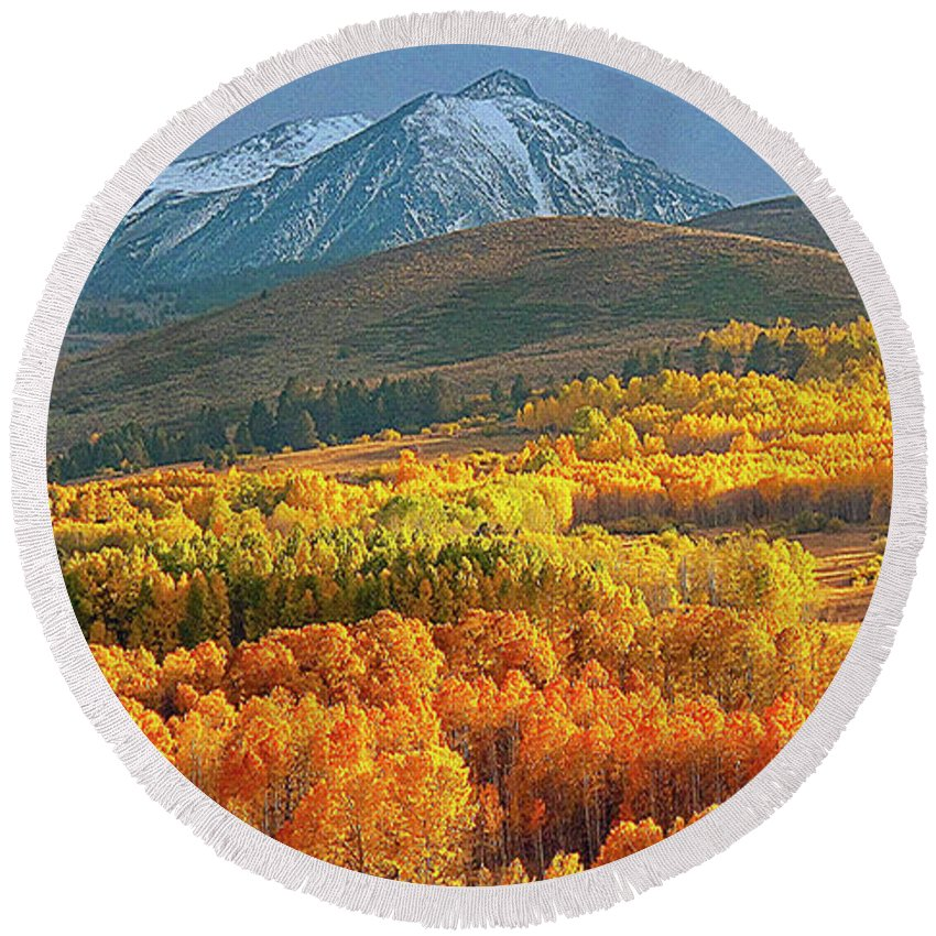 Aspen Grove Round Beach Towel featuring the photograph Evening Aspen by L J Oakes