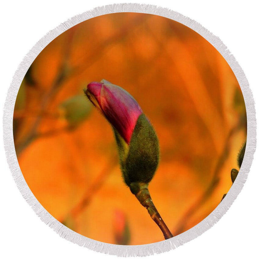Magnolia Breaking Bud Round Beach Towel featuring the photograph Evening Kiss by Tami Quigley