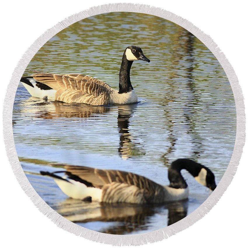 Geese Round Beach Towel featuring the photograph Evening Light On Nature by Deborah Benoit