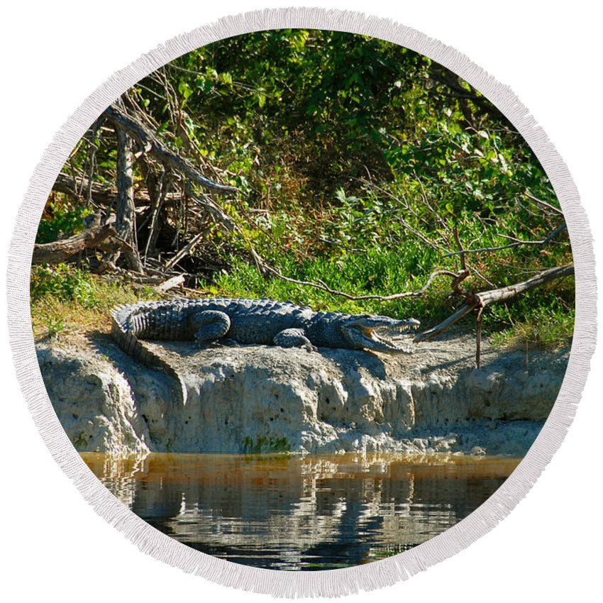Everglades National Park Round Beach Towel featuring the photograph Everglades Crocodile by David Lee Thompson