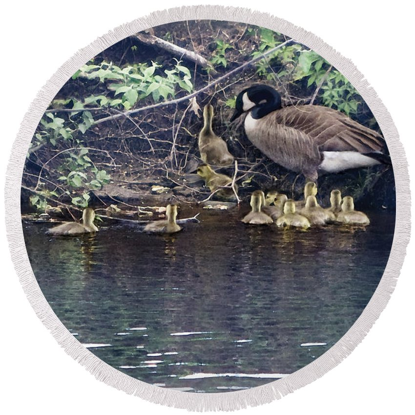Baby Geese Round Beach Towel featuring the photograph Exit by Barbara Hymer