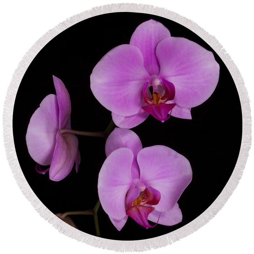 Orchid Round Beach Towel featuring the photograph Exotic Orchids by TN Fairey