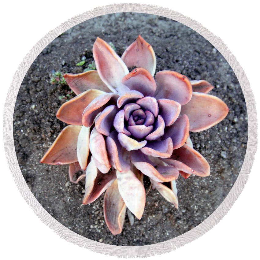 Plant Round Beach Towel featuring the photograph Exotic Succulent Plant - Pink Lilac by Sofia Metal Queen