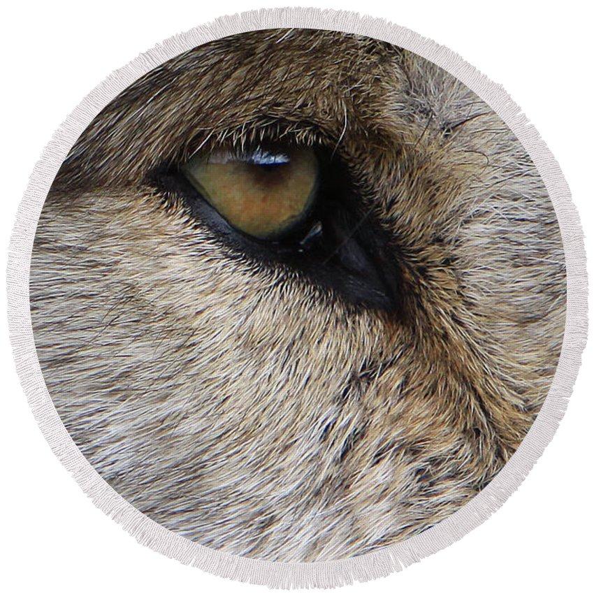 Wolf Round Beach Towel featuring the photograph Eye Catcher by Shari Jardina