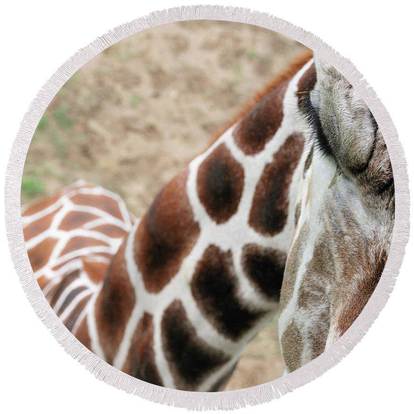 Giraffe Round Beach Towel featuring the photograph Eye Of The Giraffe. by David Arment