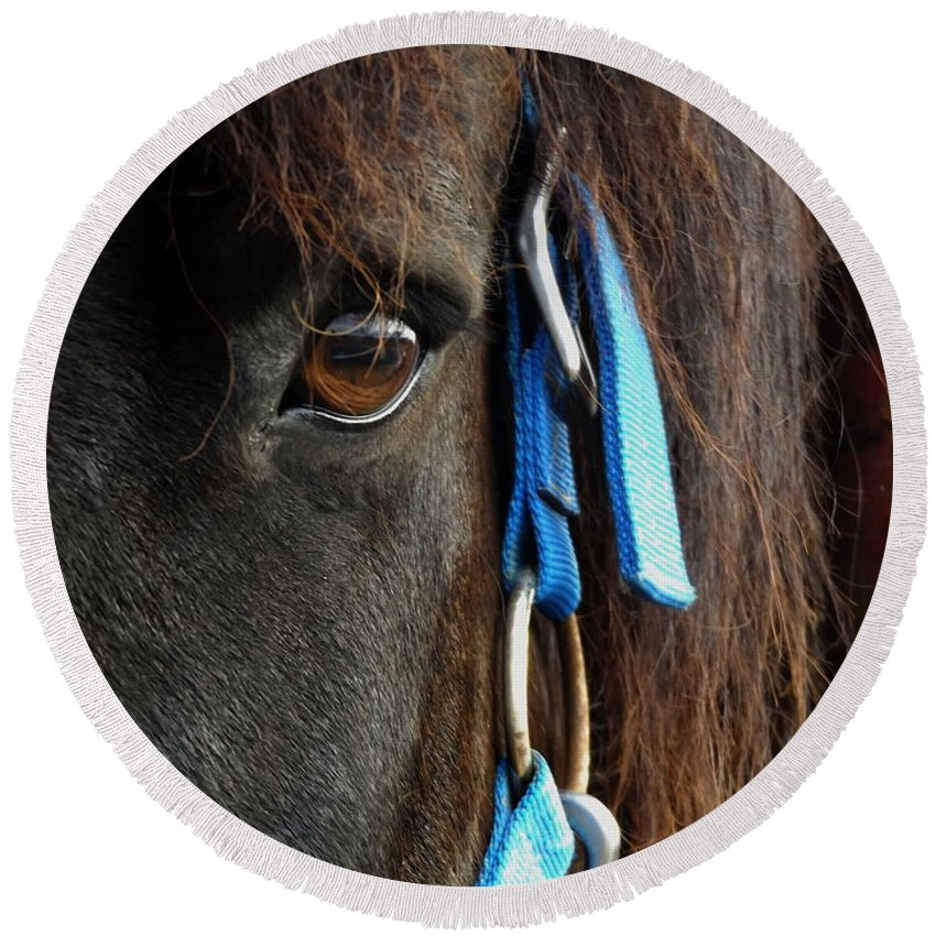 Eye Round Beach Towel featuring the photograph Eye Of The Percheron by Julie Pappas