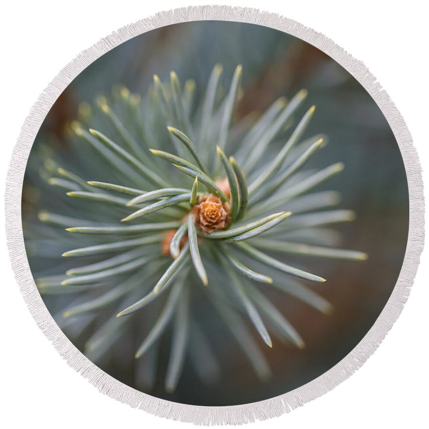 Colorado Round Beach Towel featuring the photograph Eye Of The Pine by Ashley M Conger