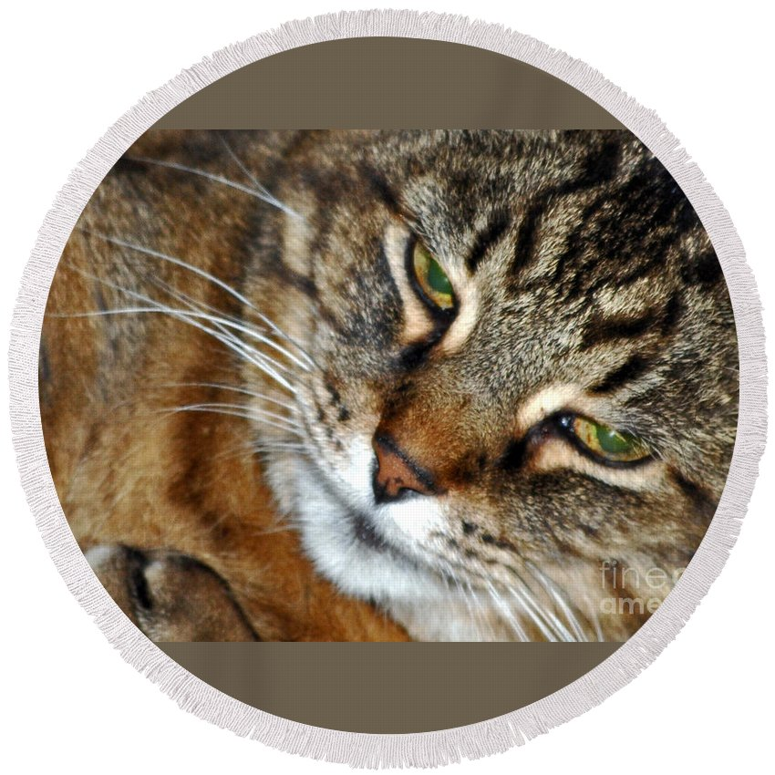 Cats Round Beach Towel featuring the photograph Eyes Of Love by Lydia Holly