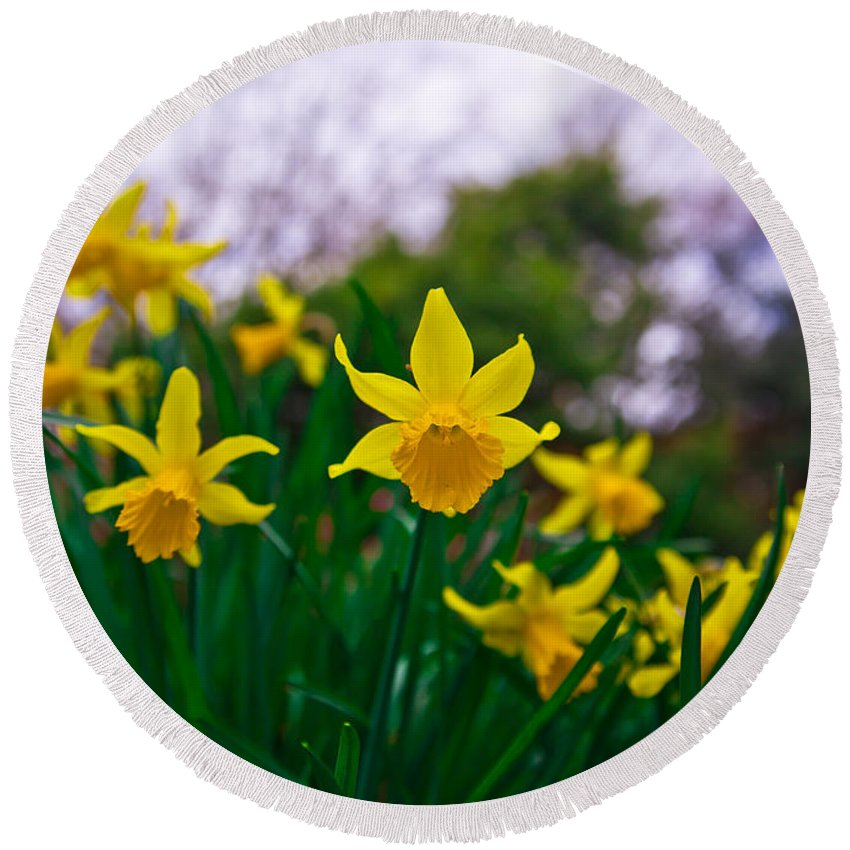 Flower Round Beach Towel featuring the photograph Daffodils Sky by Alex Art and Photo