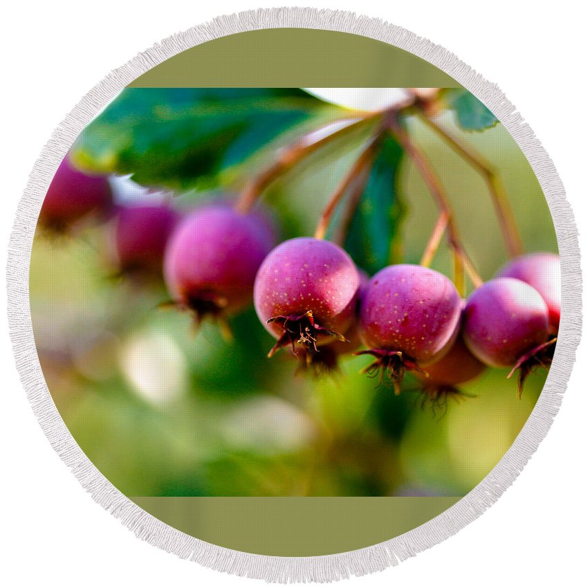 Berry Round Beach Towel featuring the photograph Fall Berries by Marilyn Hunt