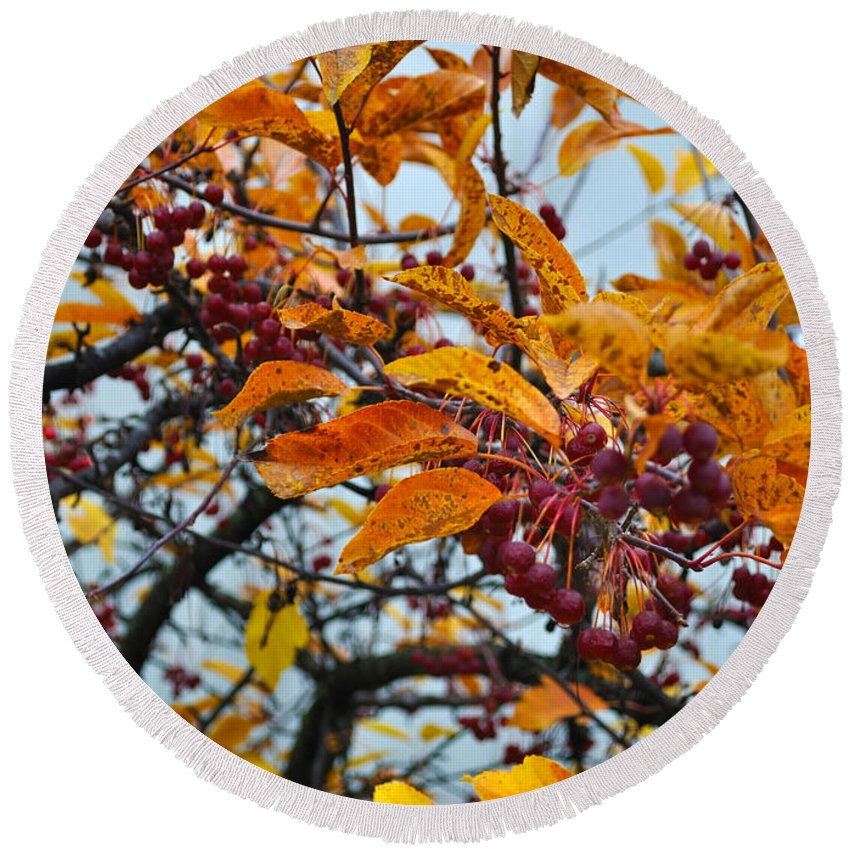 Berries Round Beach Towel featuring the photograph Fall Berries by Tim Nyberg