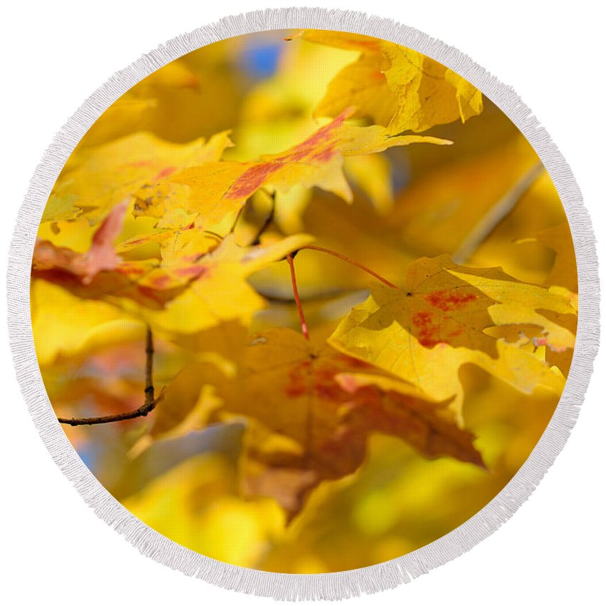 Nature Round Beach Towel featuring the photograph Fall Colors by Sebastian Musial