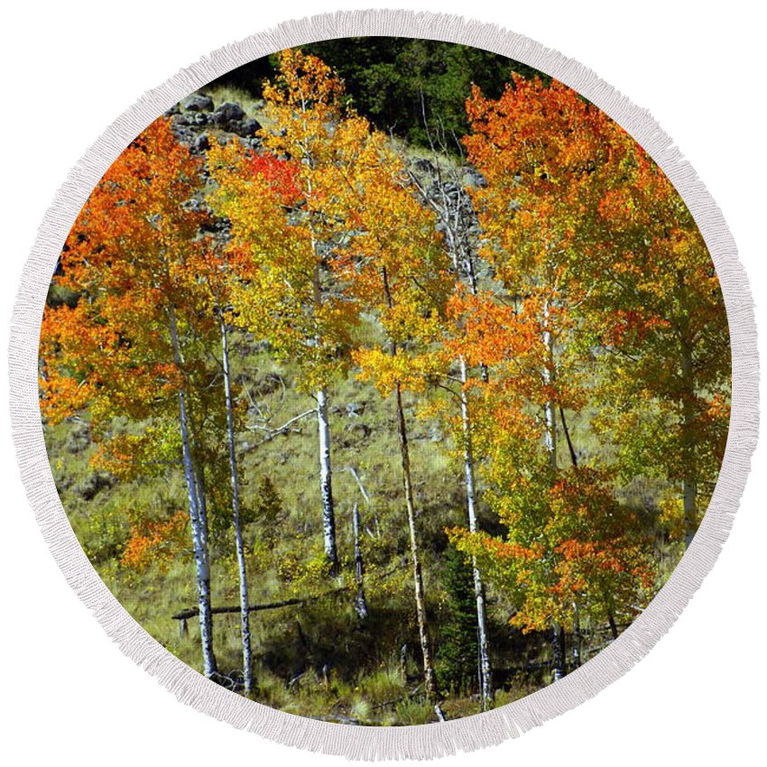 Round Beach Towel featuring the photograph Fall In Colorado by Marty Koch