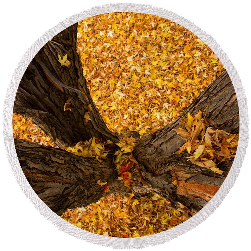 Maple Round Beach Towel featuring the photograph Fall by James BO Insogna