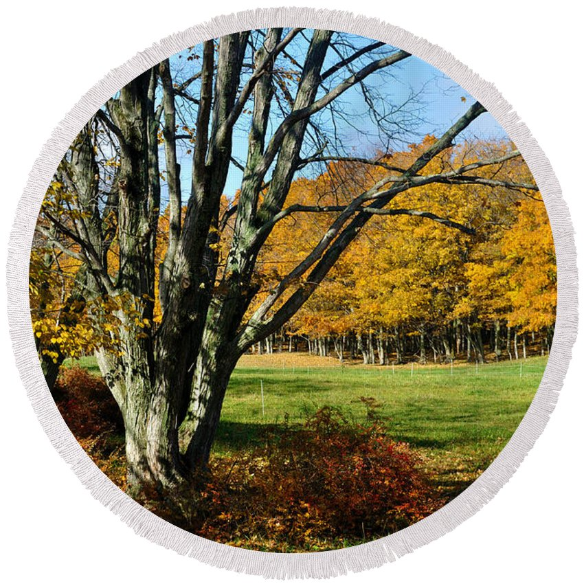 Trees Round Beach Towel featuring the photograph Fall Pasture by Tim Nyberg