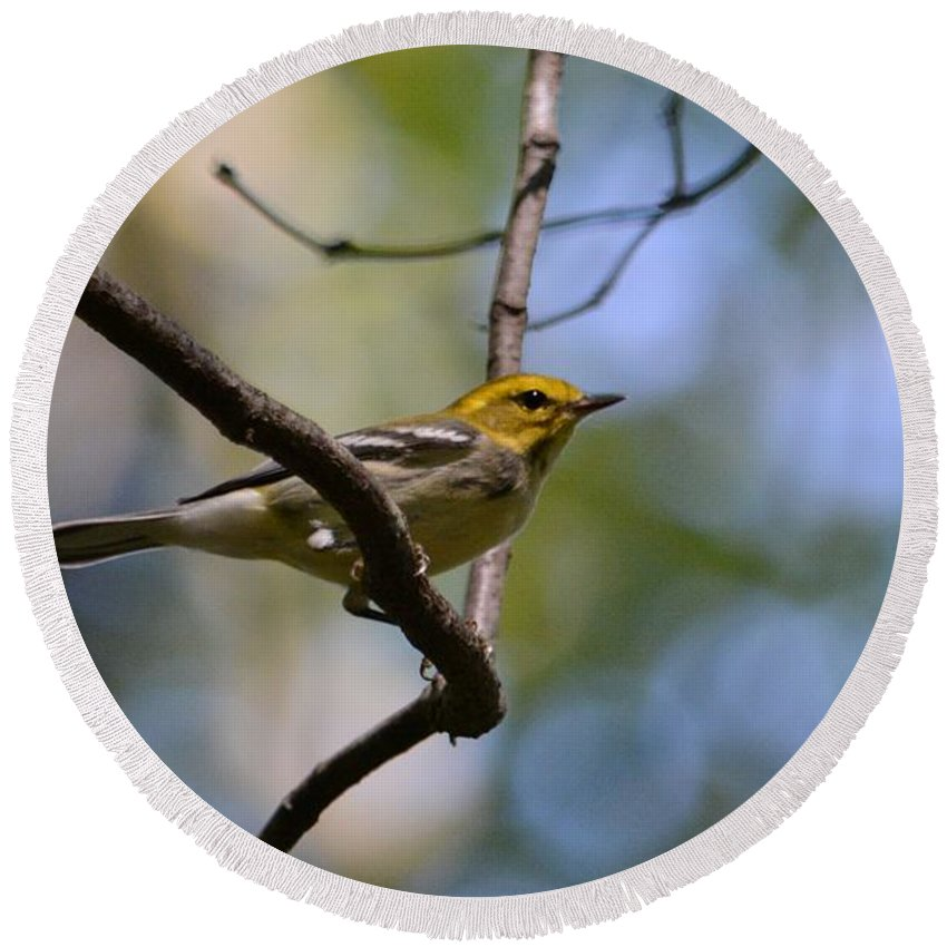 Warbler Round Beach Towel featuring the photograph Fall Warbler by David Irwin
