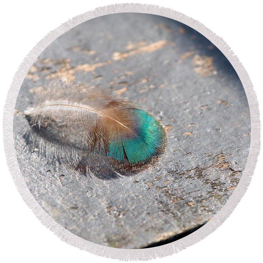 Peacock Round Beach Towel featuring the photograph Fallen Peacock Feather by Louise Heusinkveld