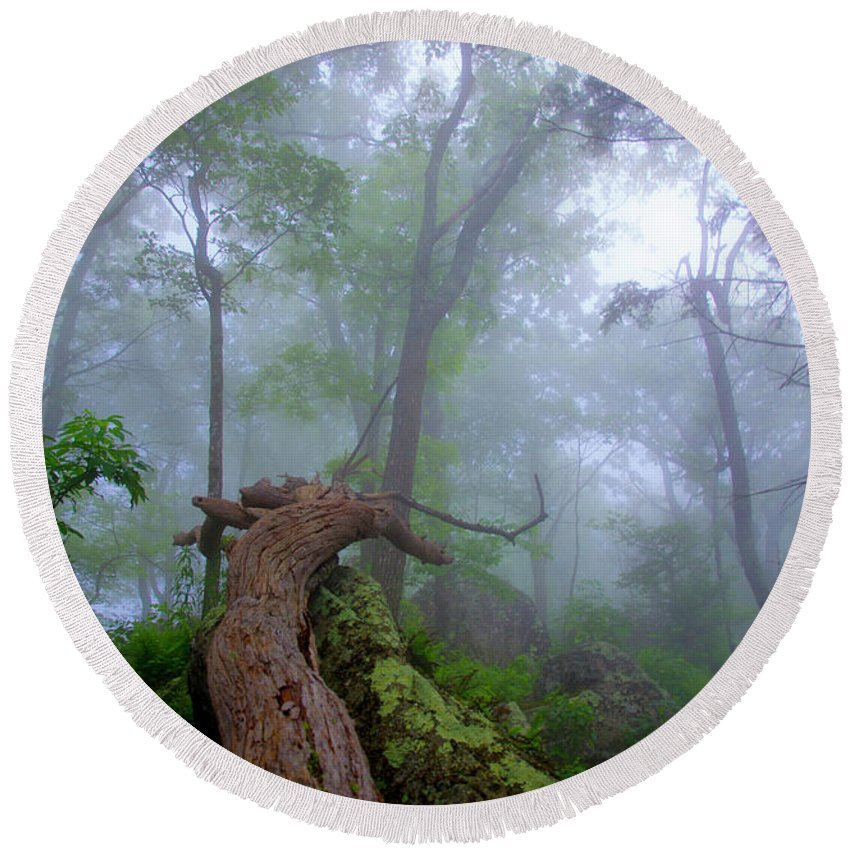 Tree Round Beach Towel featuring the photograph Fallen Tree by Anthony Zeljeznjak