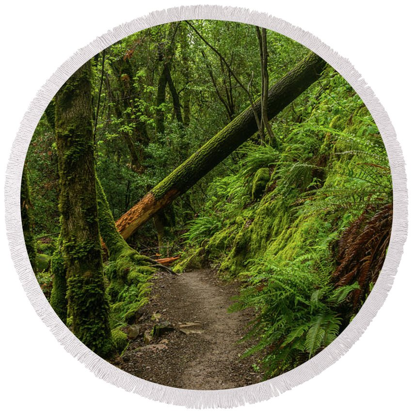 Landscape Round Beach Towel featuring the photograph Fallen Tree On The Trail by Javier Flores