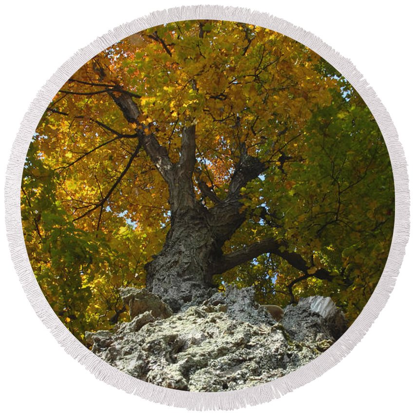 Fall Round Beach Towel featuring the photograph Falling Tree by David Lee Thompson