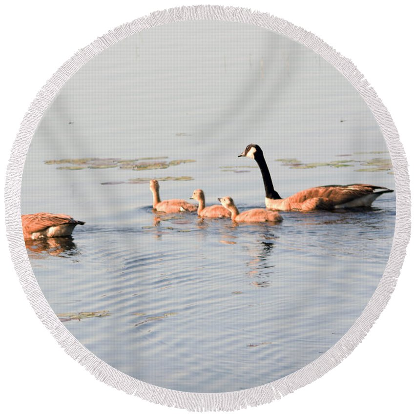 Canadian Geese Round Beach Towel featuring the photograph Family Of Five by Linda Kerkau