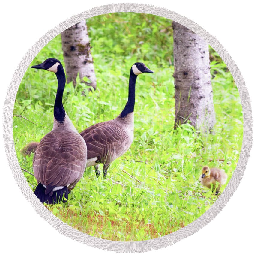 Canada Goose Round Beach Towel featuring the photograph Family Outing by William Tasker