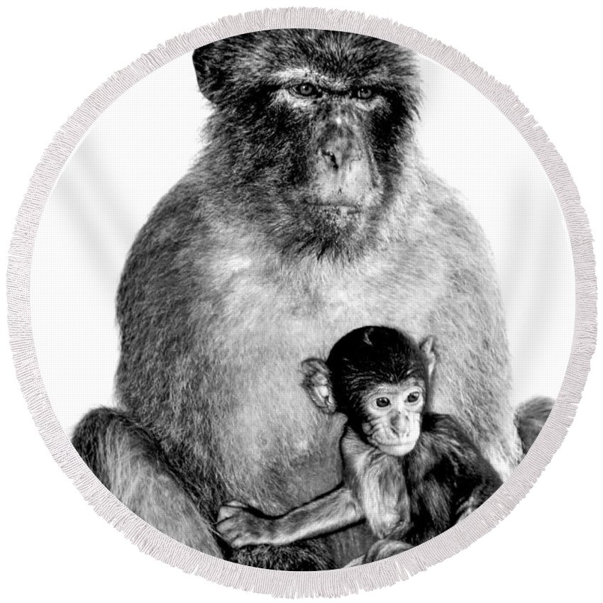 Monkeys Round Beach Towel featuring the photograph Family Portrait by Anna Serebryanik