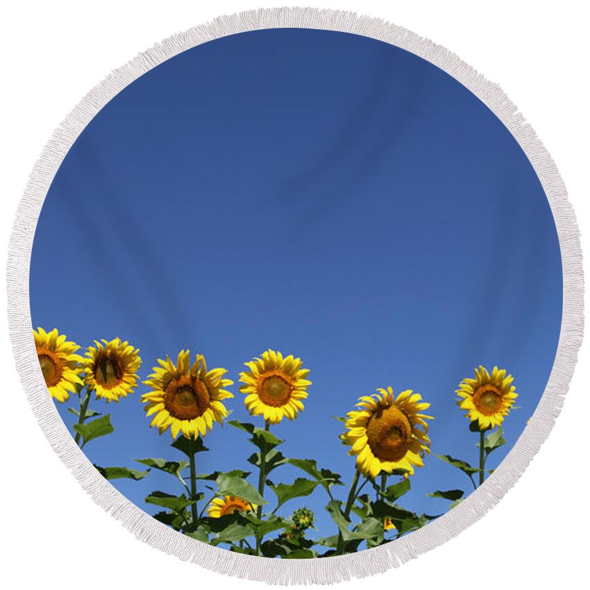 Sunflowers Round Beach Towel featuring the photograph Family Time by Amanda Barcon