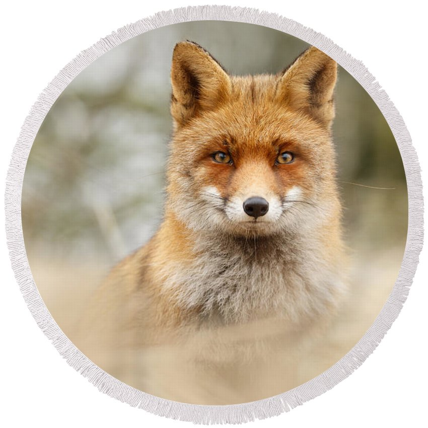 Red Fox Round Beach Towel featuring the photograph Fantastic Mr Fox by Roeselien Raimond
