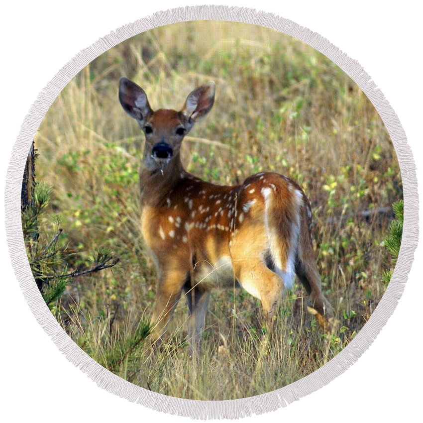 Deer Round Beach Towel featuring the photograph Fawn by Marty Koch