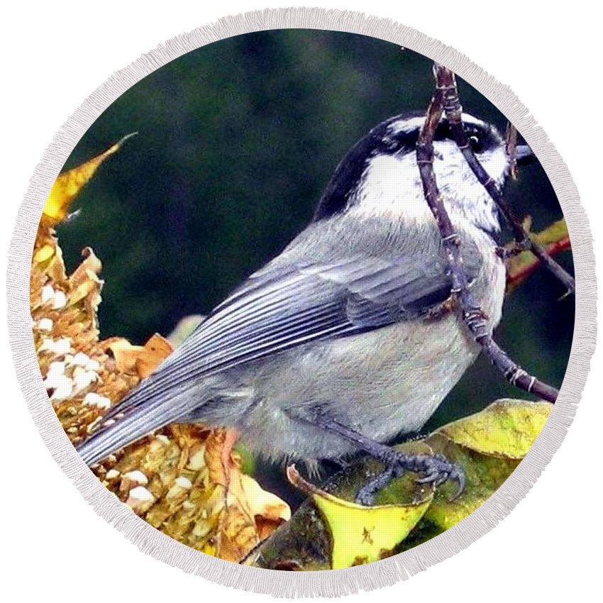 Autumn Round Beach Towel featuring the photograph Feast For A Chickadee by Will Borden