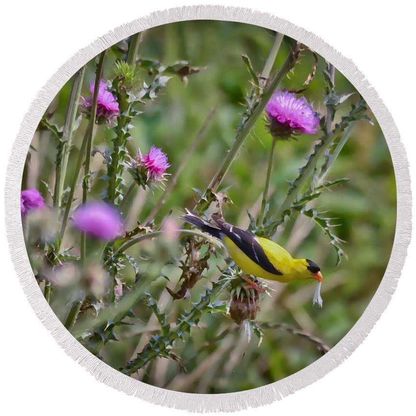 Goldfinch Round Beach Towel featuring the photograph Feasting In The Flowers by Kerri Farley