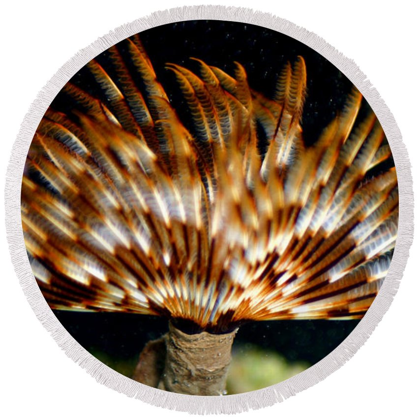 Feather Duster Round Beach Towel featuring the photograph Feather Duster by Anthony Jones