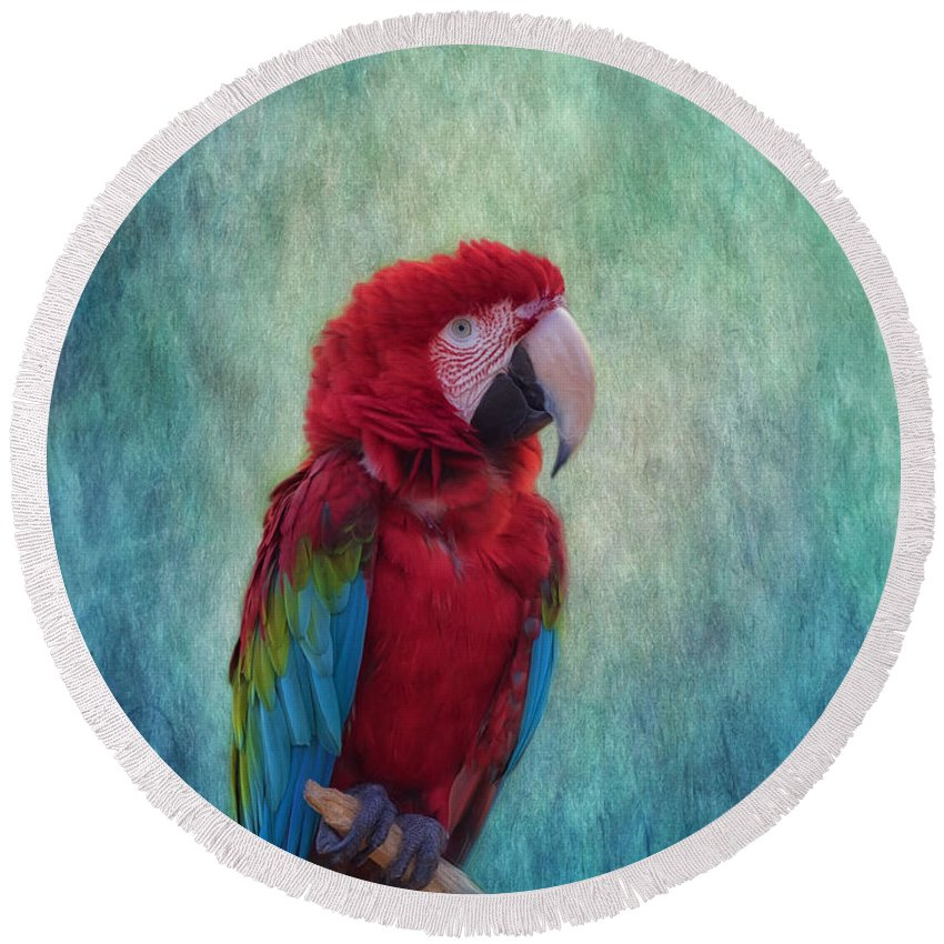 Macaw Round Beach Towel featuring the photograph Feathered Friend by Kim Hojnacki