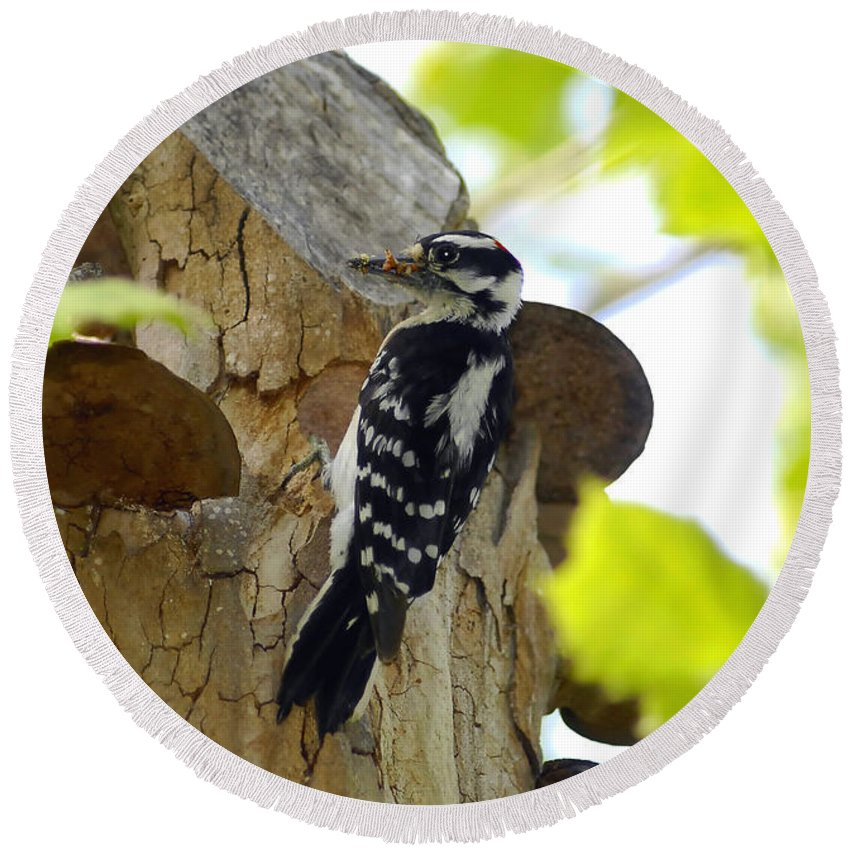 Downy Woodpecker Round Beach Towel featuring the photograph Feeding Time by David Lee Thompson