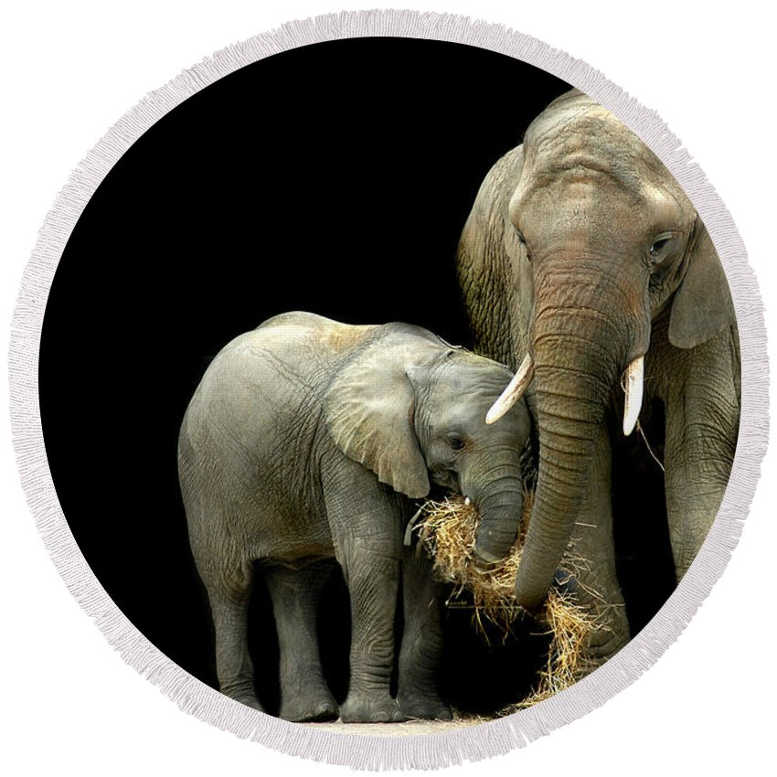 Elephant Round Beach Towel featuring the photograph Feeding Time by Stephie Butler