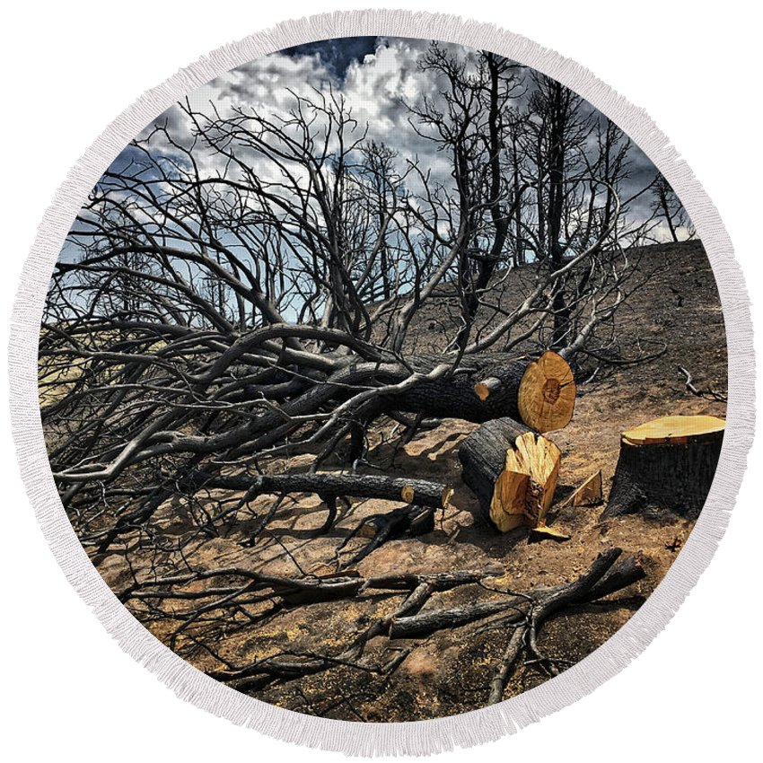 Trees Round Beach Towel featuring the photograph Felled After The Wildfire by Douglas Craig
