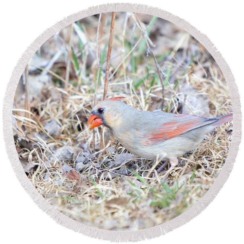 Adult Round Beach Towel featuring the photograph Female Cardinal 2 by Bonfire Photography