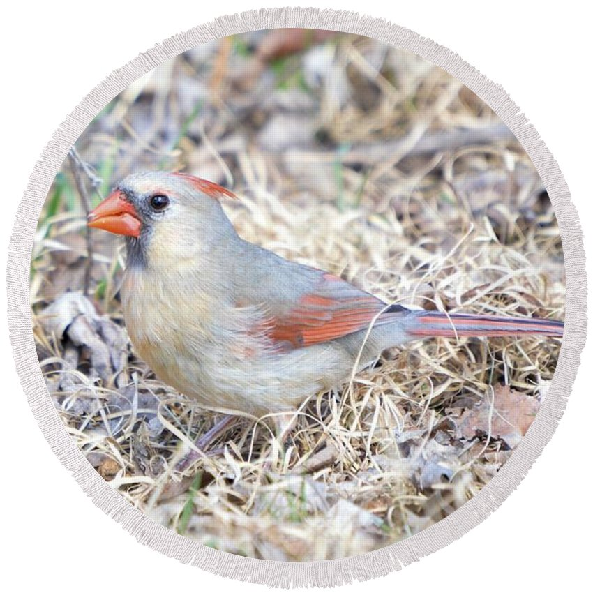 Adult Round Beach Towel featuring the photograph Female Cardinal by Bonfire Photography