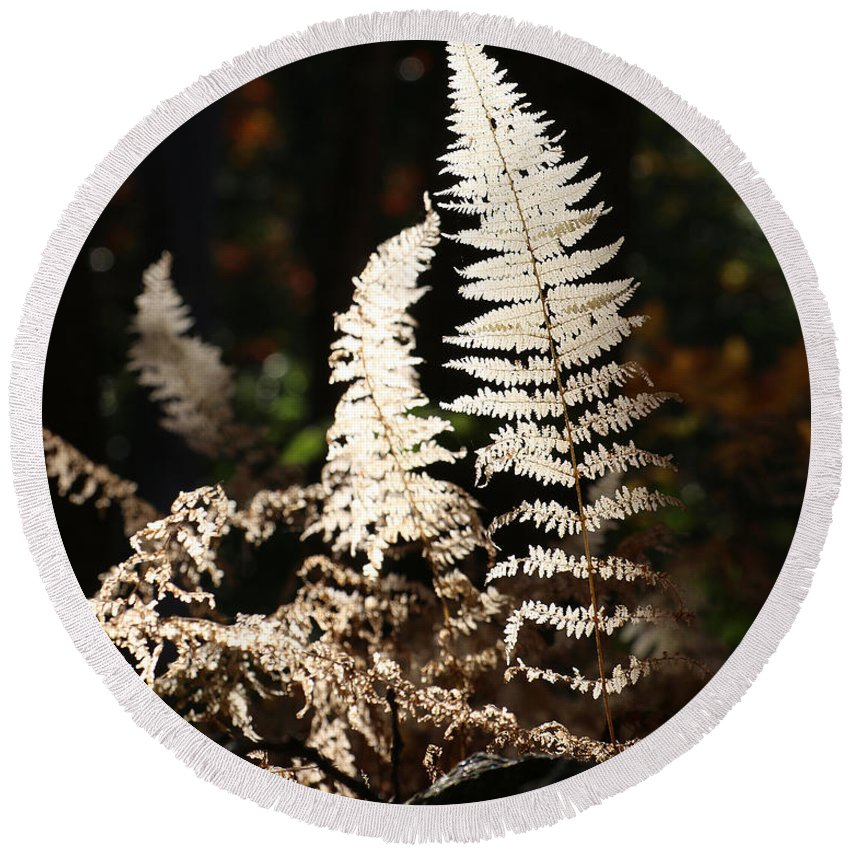 Fern Round Beach Towel featuring the photograph Fern Glow 2 by William Selander