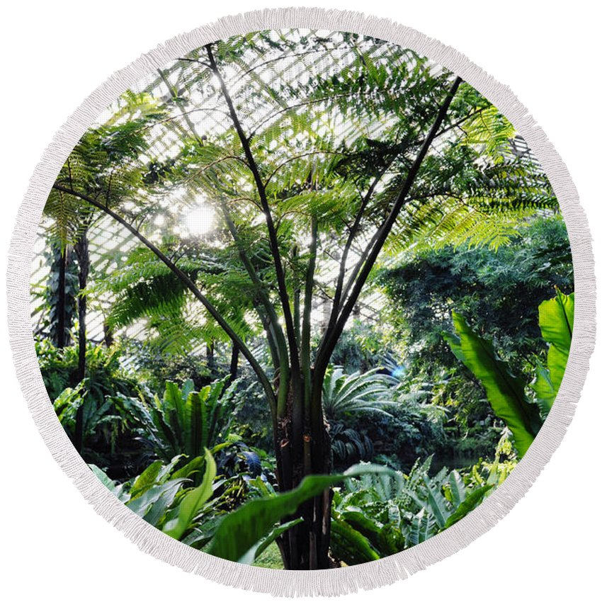 Garfield Park Conservatory Round Beach Towel featuring the photograph Fern Room Light Rays by Kyle Hanson