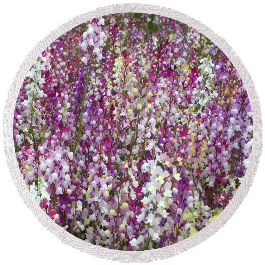 Flowers Round Beach Towel featuring the photograph Field Of Multi-colored Flowers by Carol Groenen