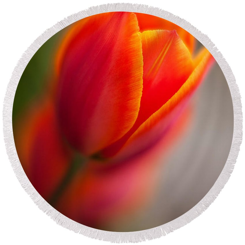 Tulip Round Beach Towel featuring the photograph Fiery Tulip by Mike Reid