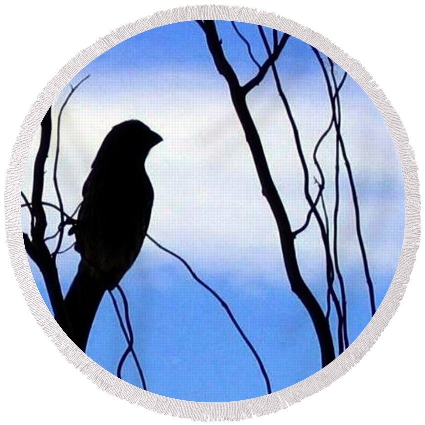 Finch Round Beach Towel featuring the photograph Finch Silhouette 1 by Will Borden