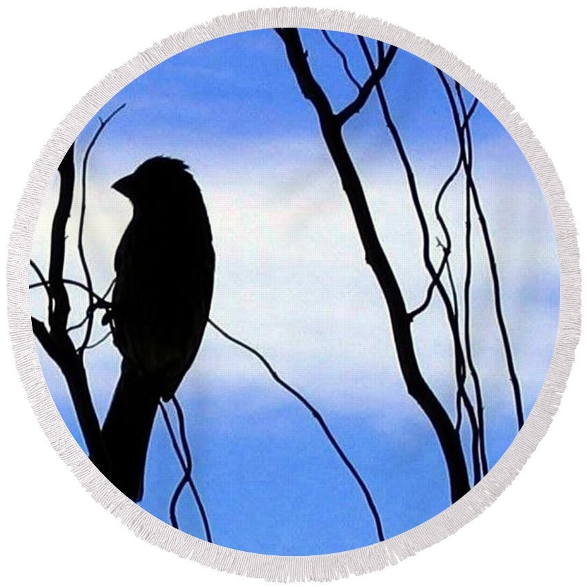 Finch Round Beach Towel featuring the photograph Finch Silhouette 2 by Will Borden