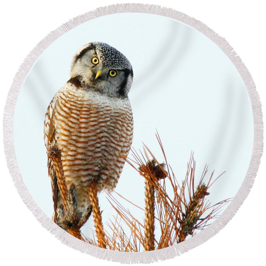 Owl Round Beach Towel featuring the photograph Finding The Balance by Heather King