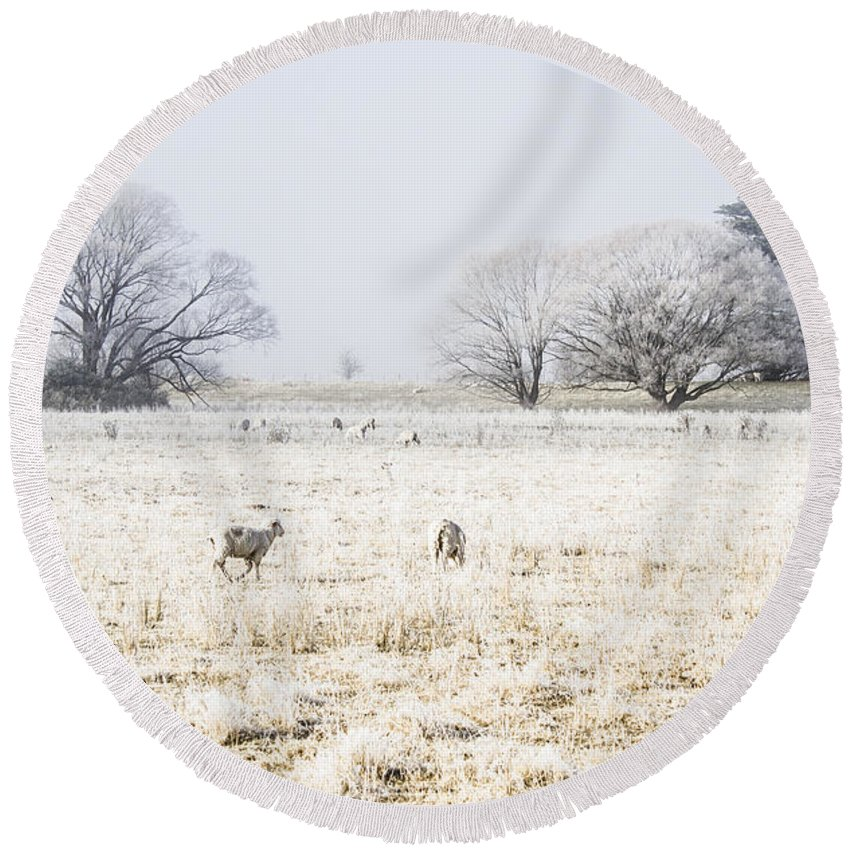 Sheep Round Beach Towel featuring the photograph Fingal Winter Farmyard by Jorgo Photography - Wall Art Gallery