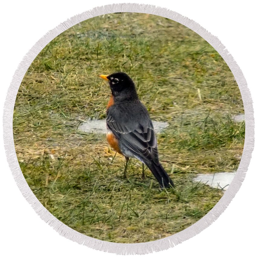 Robin Round Beach Towel featuring the photograph First Robin Of Spring by William Tasker